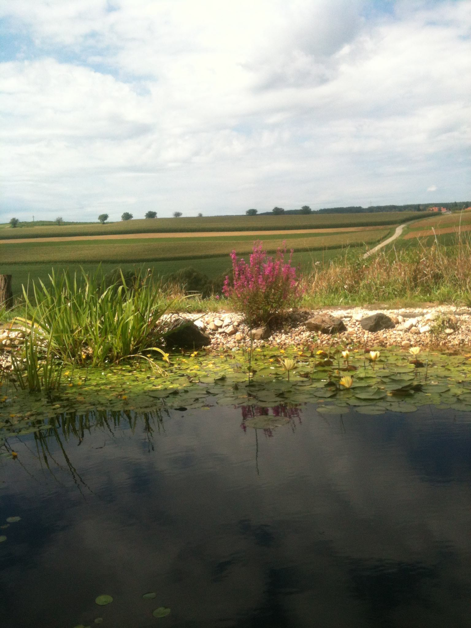 Blick über Teich in Landschaft
