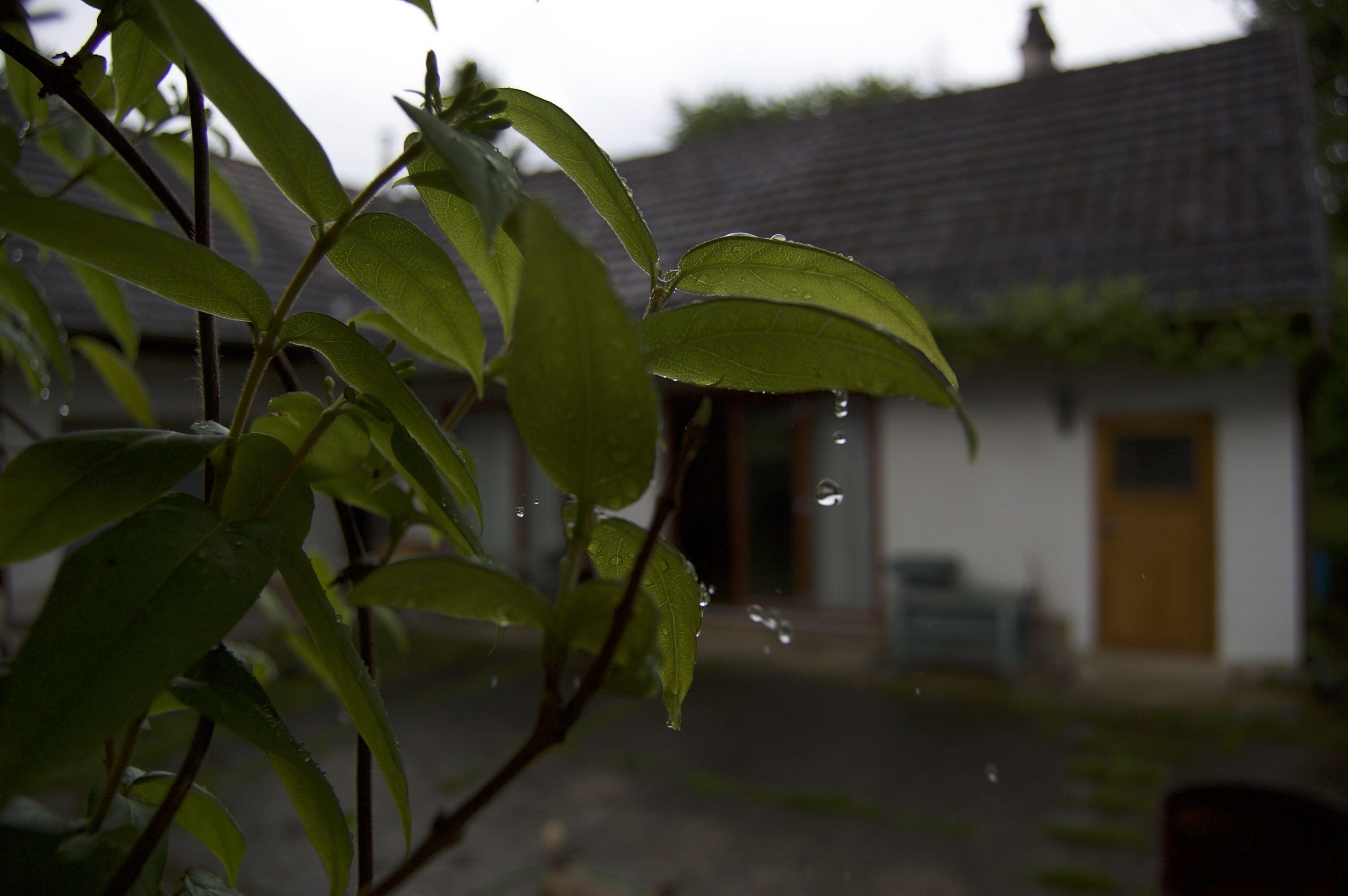 Hof bei Regen