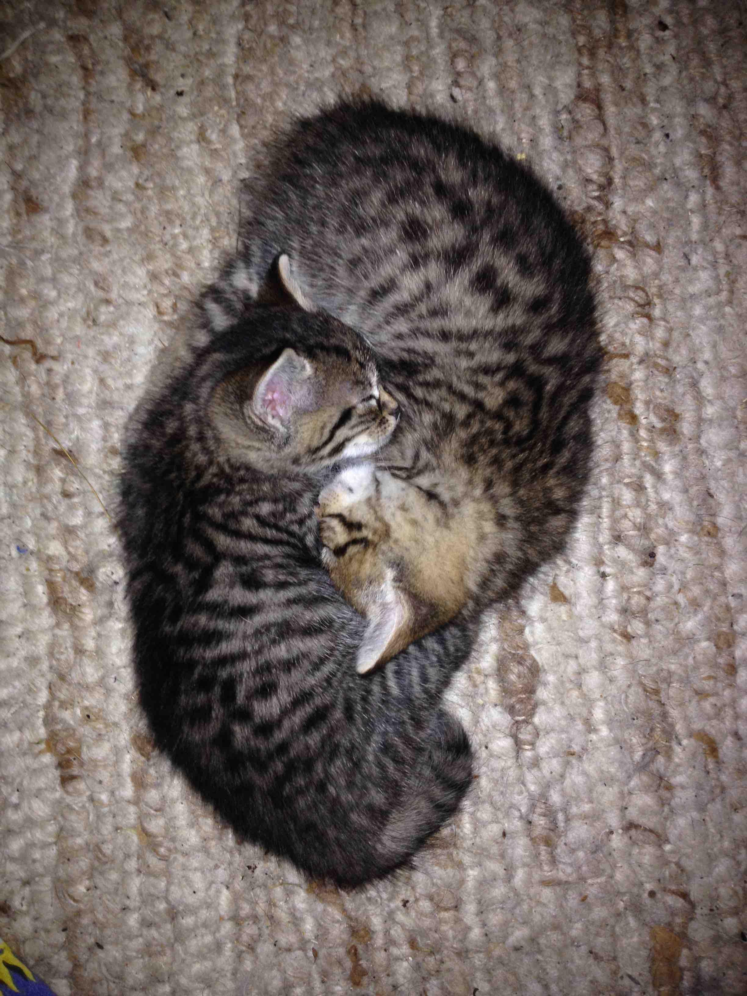Katzen schlafen