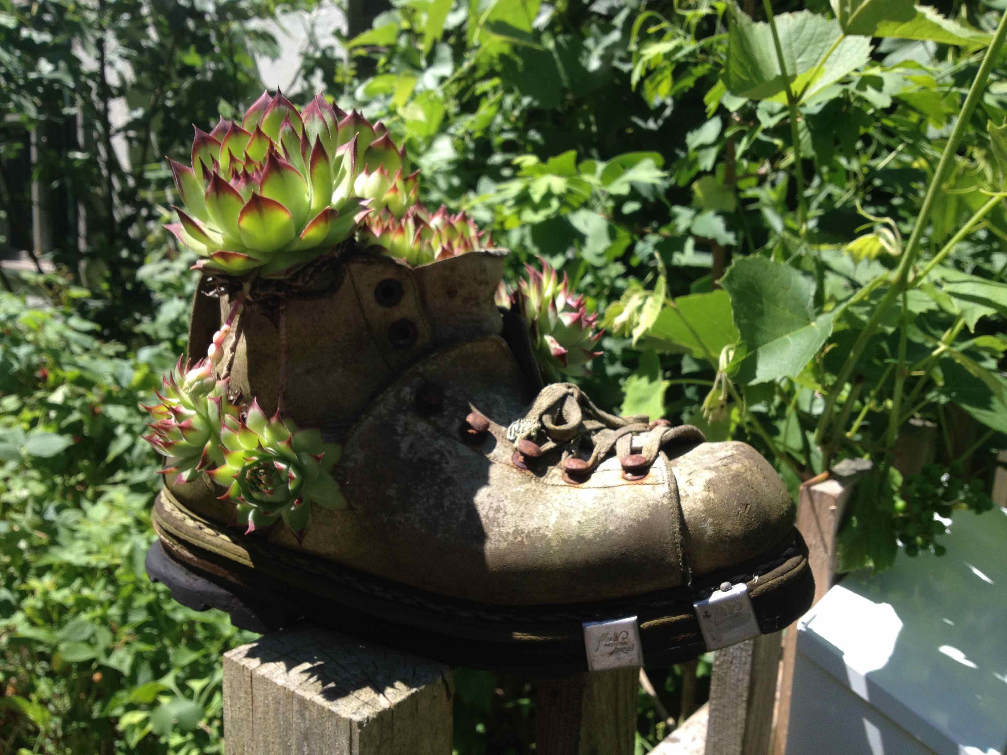 alter Schuh mit Pflanzen